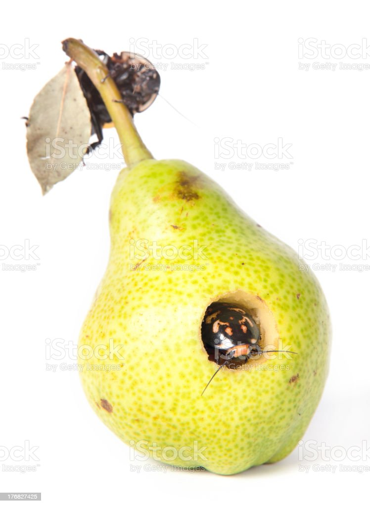 pears & cockroaches royalty-free stock photo