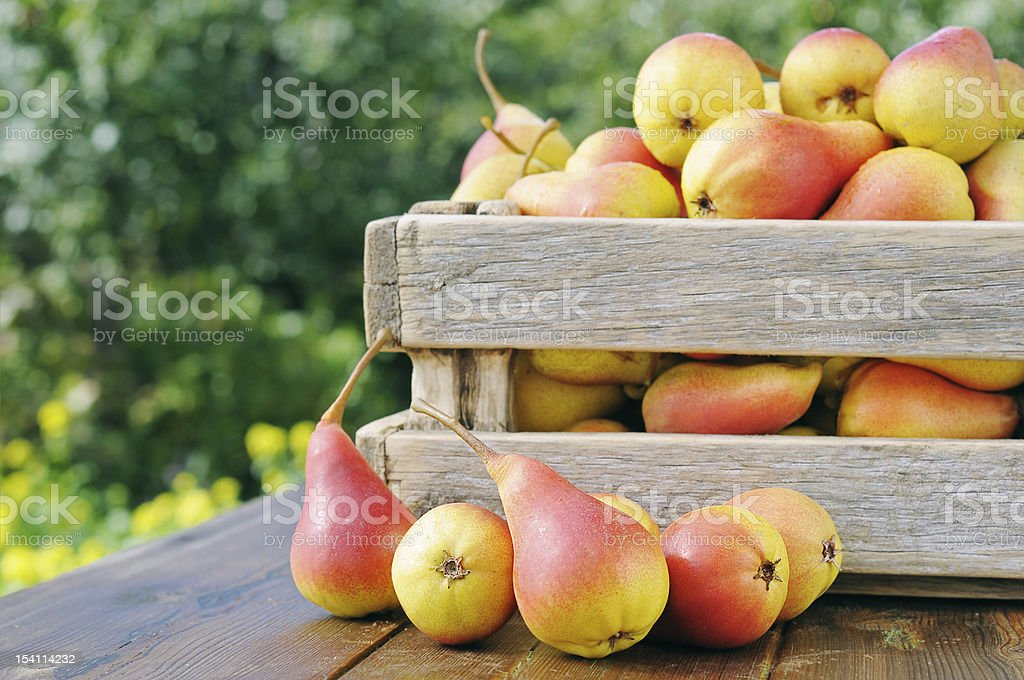 Pears in a wooden box. stock photo