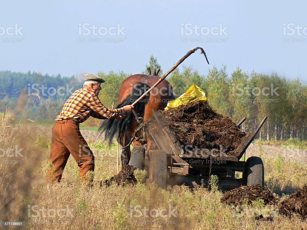 Peasant and dung stock photo