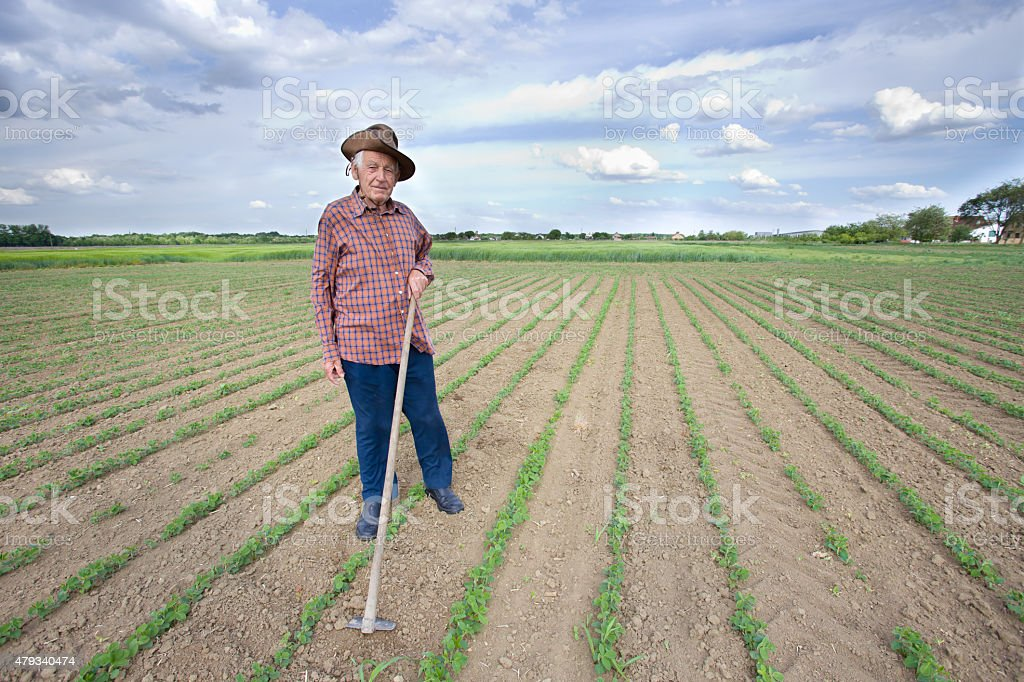 Peasant with hoe in the field stock photo