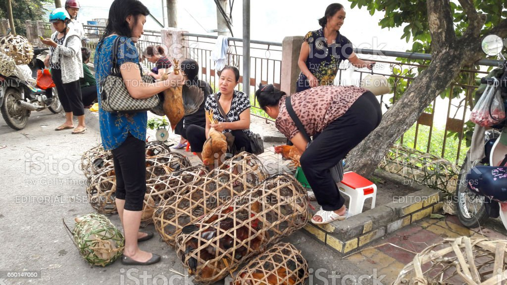 peasants from province selling live chicken in the market stock photo