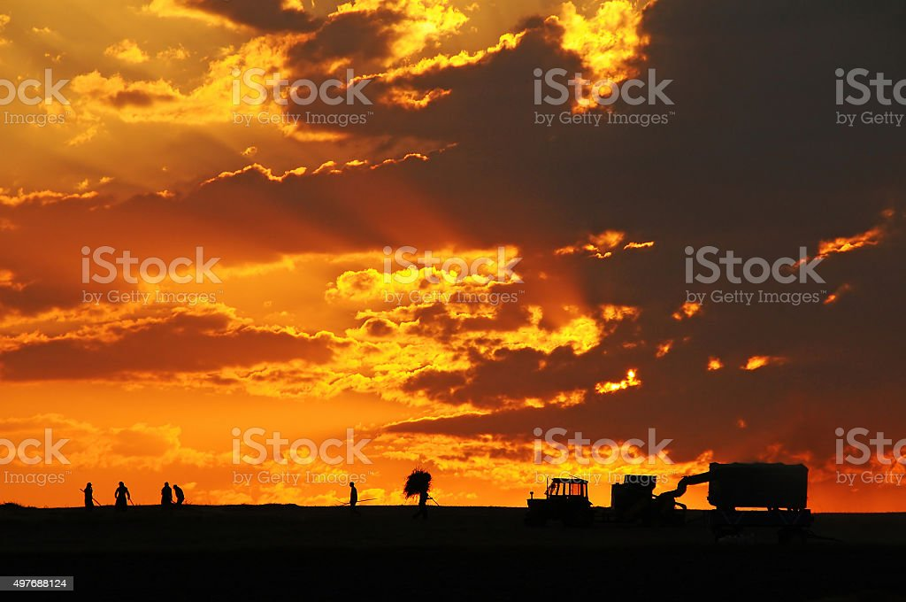 Peasants Harvest Their Products At Sunset In Turkey stock photo