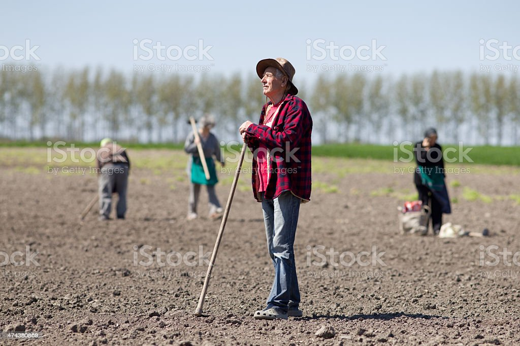 Peasants hoeing on farmland stock photo