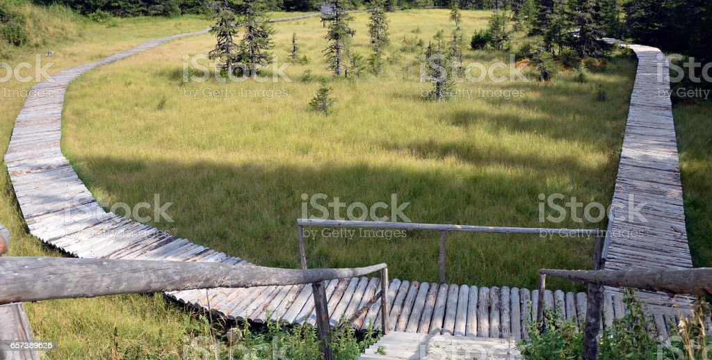 Peat bog in Bucegi Mountains stock photo