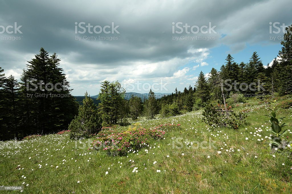 Peat bog in Pyrenees royalty-free stock photo