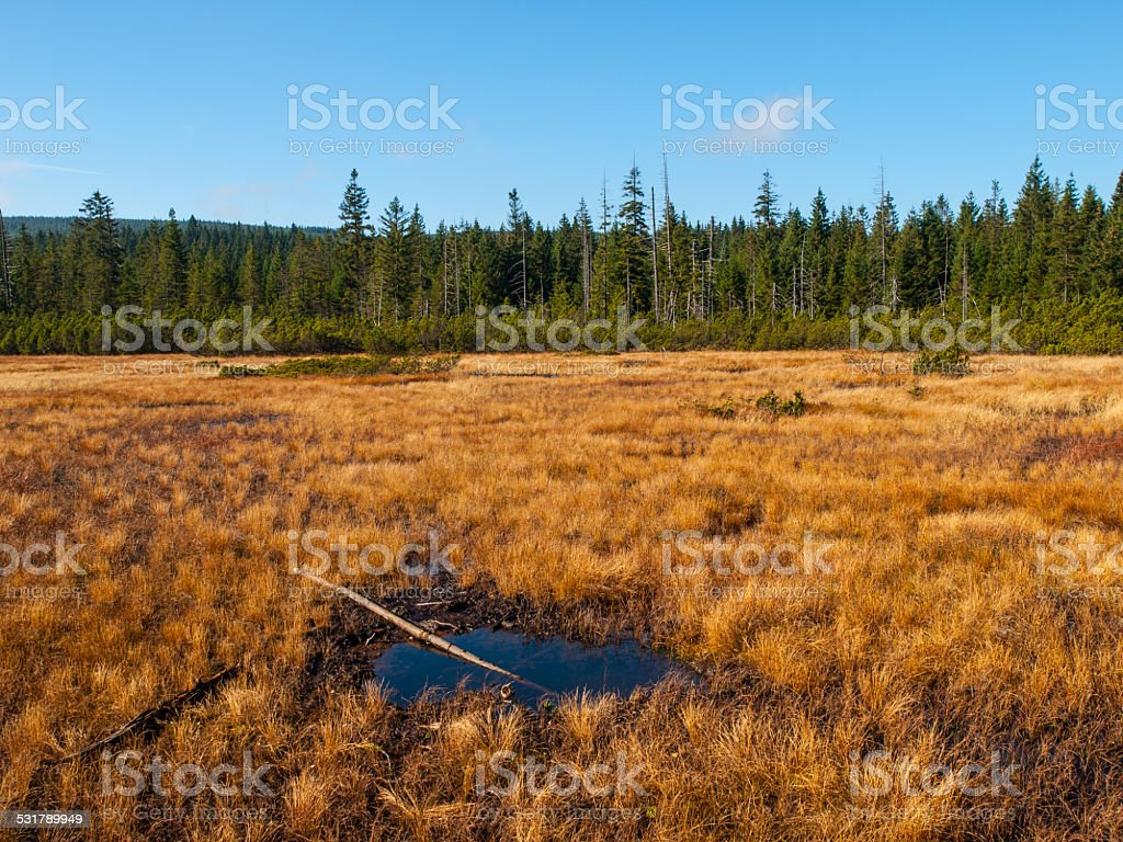Peat bog of Jizera Mountains stock photo