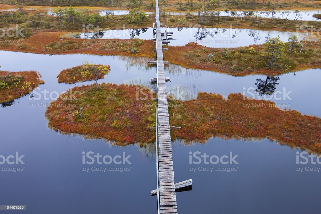 peat bog swamp Europe stock photo