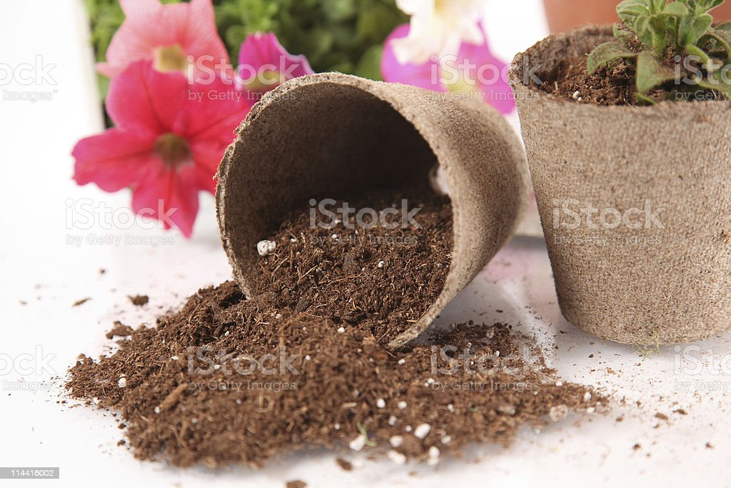 Peat Moss stock photo