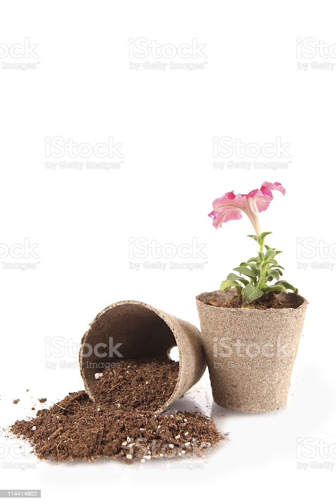 Peat Pots stock photo