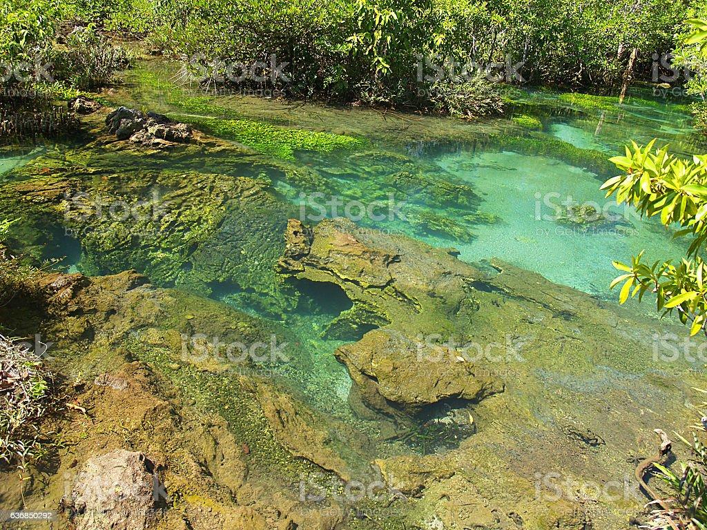 peat swamp forest in Krabi Thailand stock photo