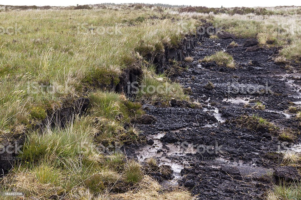 peatland stock photo