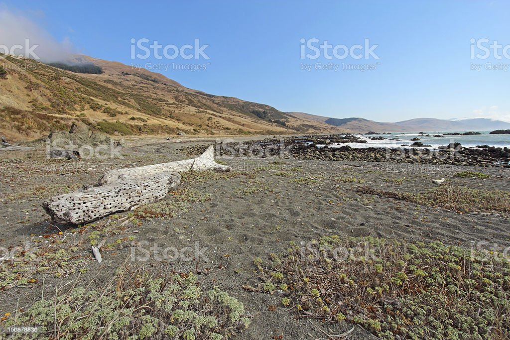 Pebble beach and driftwood on the Lost Coast of California royalty-free stock photo