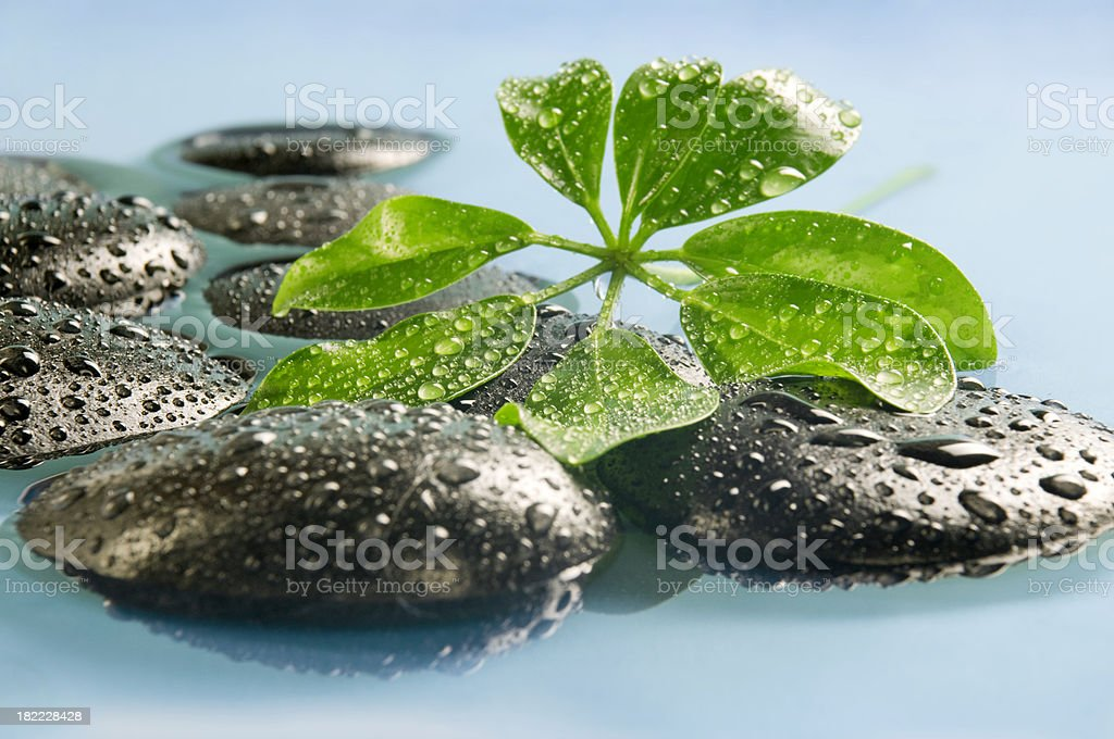 Pebbles and leaf stock photo