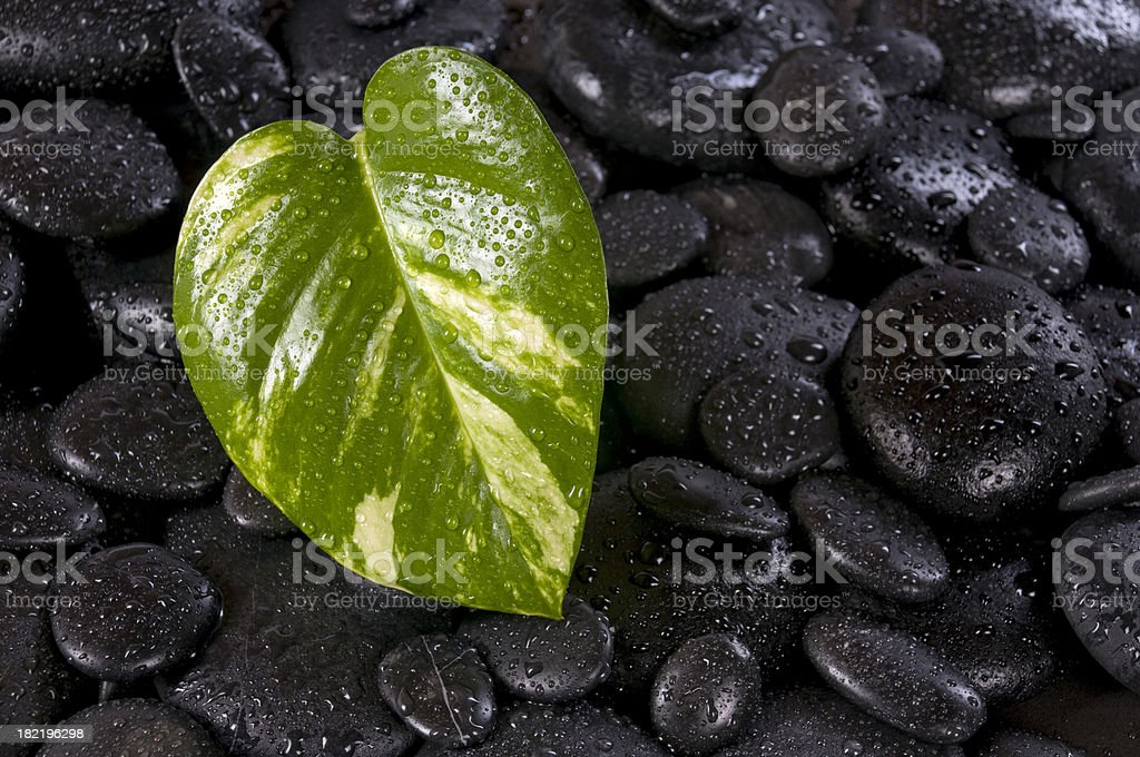 Pebbles and leaf with droplets stock photo