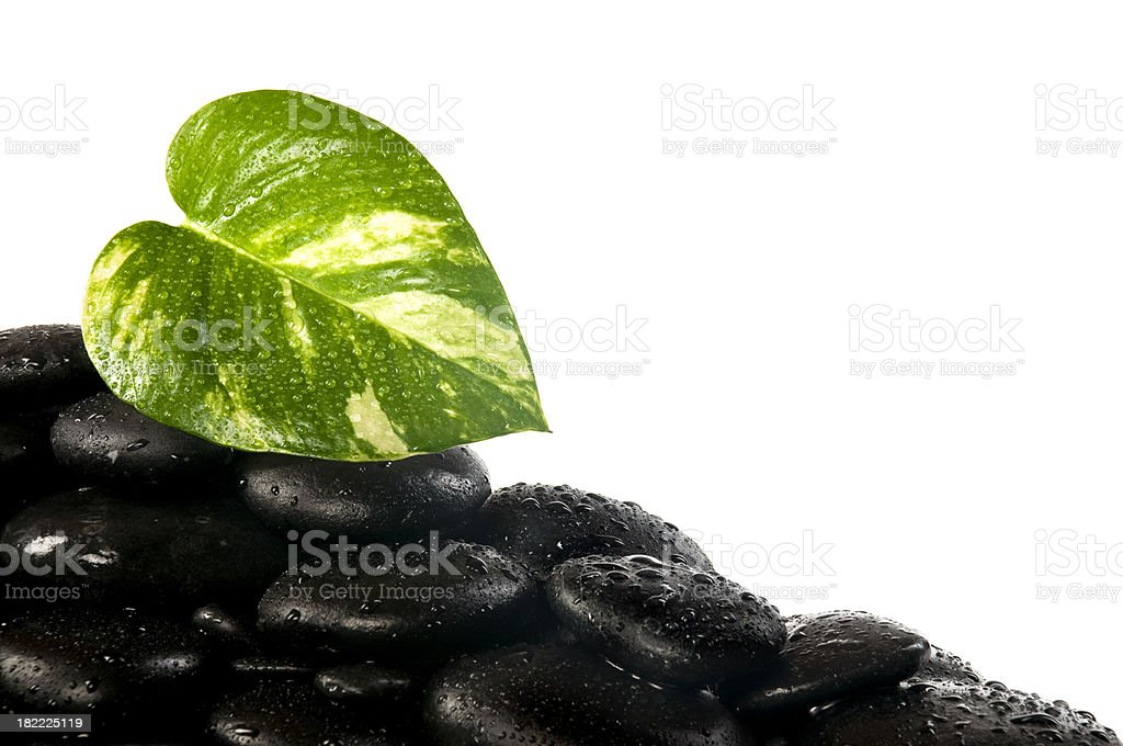 Pebbles and leaf with droplets royalty-free stock photo