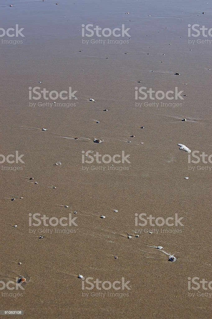 Pebbles and sea shells royalty-free stock photo