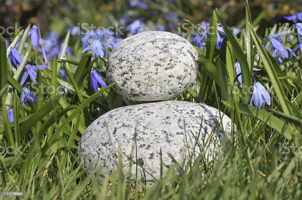 Pebbles And Siberian Squill 1 stock photo