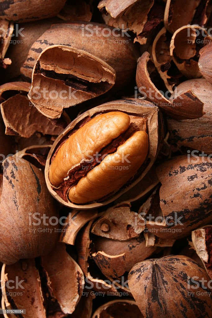 Pecan nut royalty-free stock photo