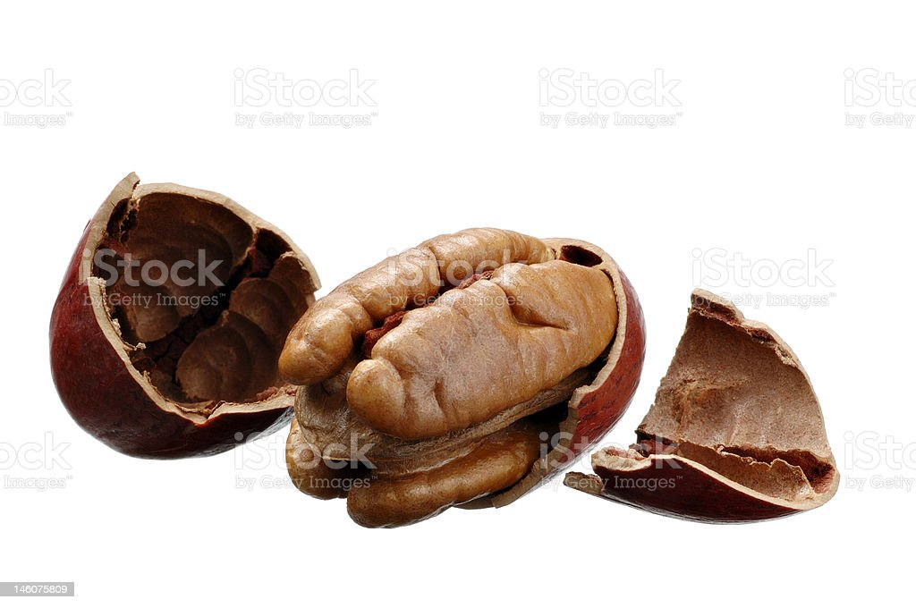 Pecan with shell royalty-free stock photo