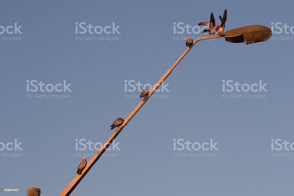 Pecking Order stock photo
