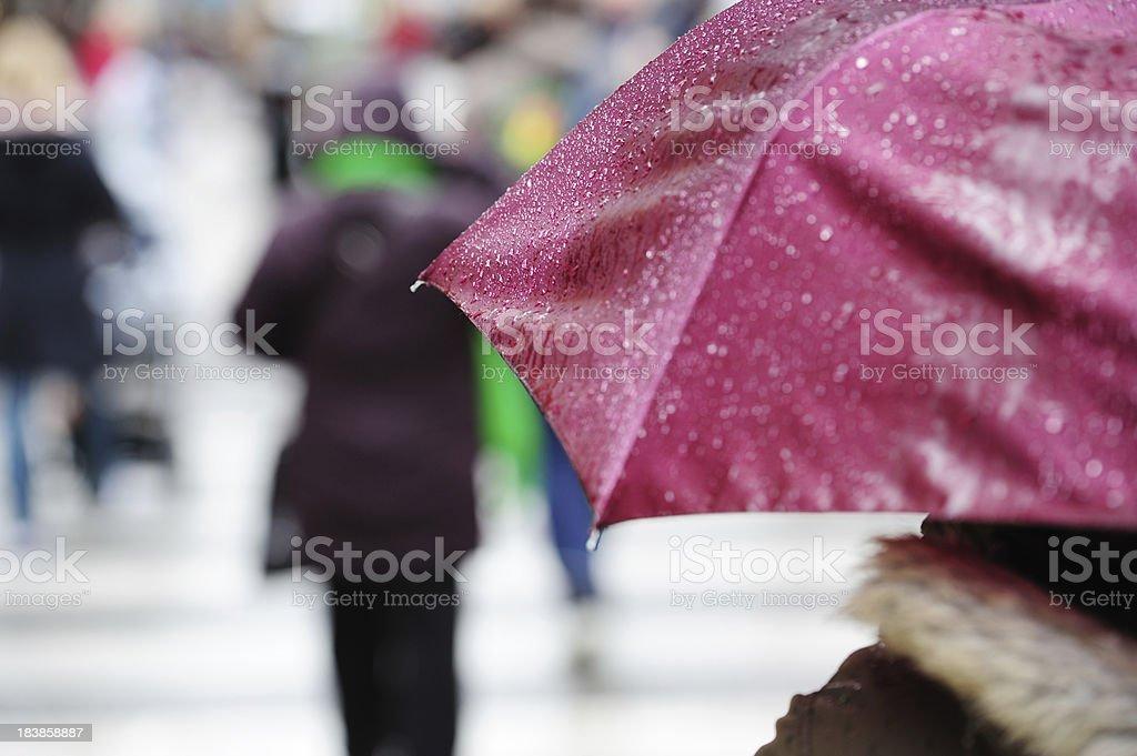 Pedestrian with umbrella on zebra crossing. It's raining royalty-free stock photo