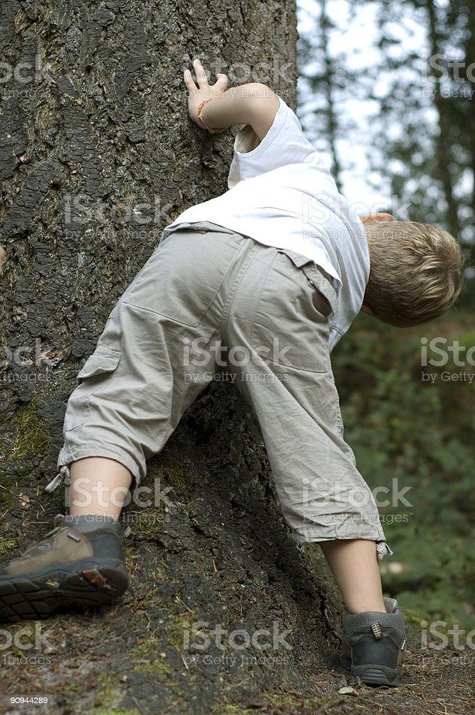 Peek around the tree royalty-free stock photo