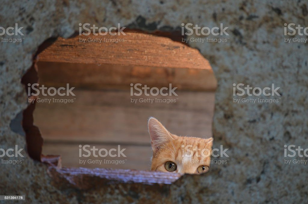 Peekaboo cat stock photo