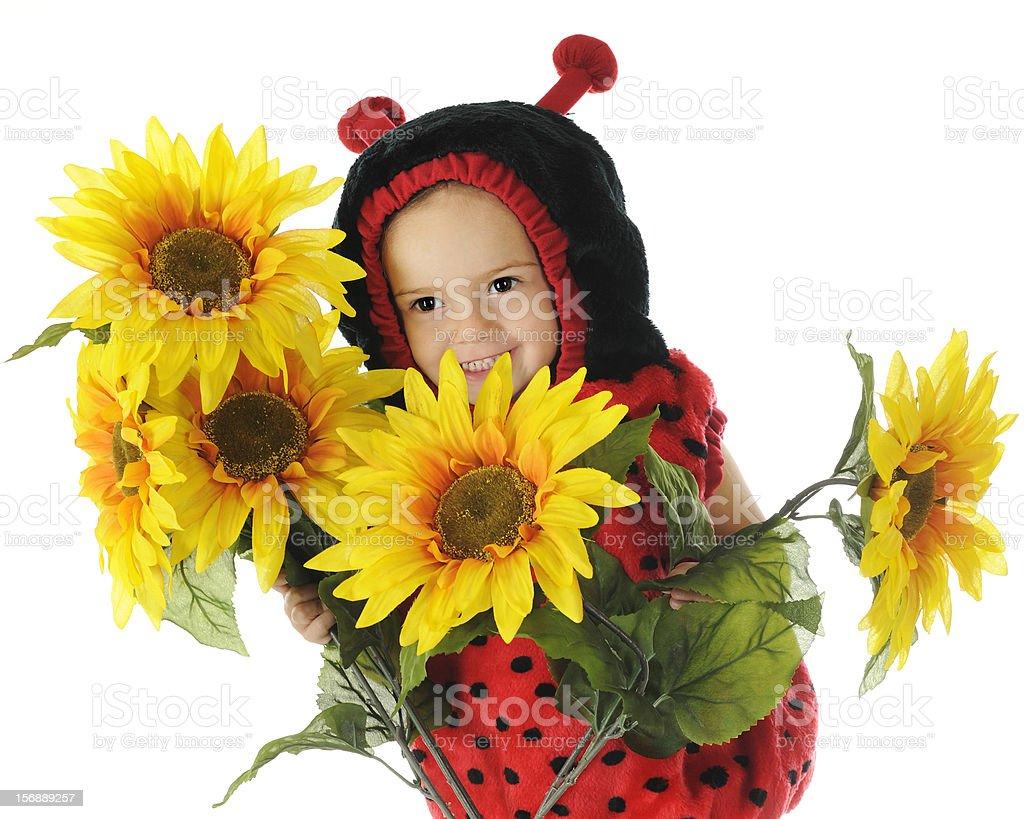 Peek-a-Boo Ladybug stock photo