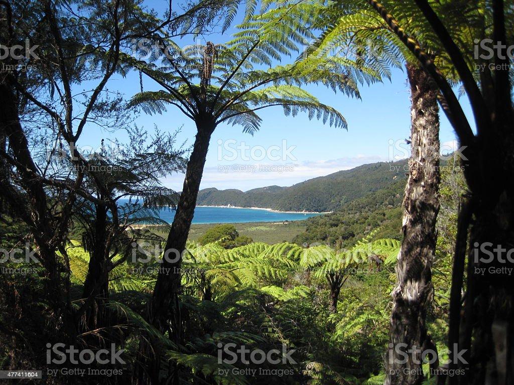 Peek-a-boo View of Bay at Abel Tasman National Park stock photo