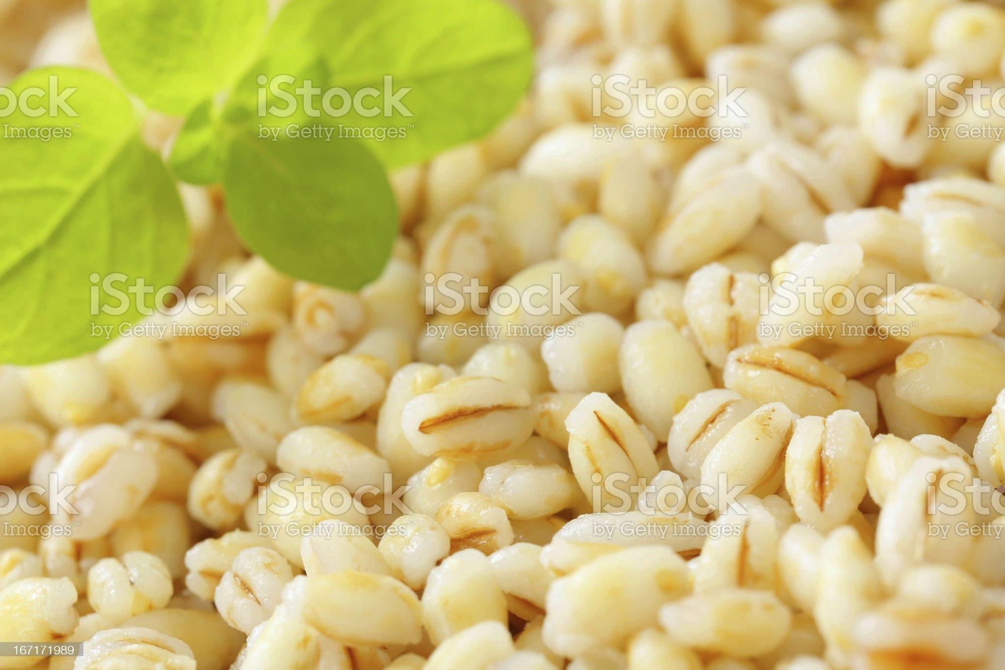 peeled barley background royalty-free stock photo