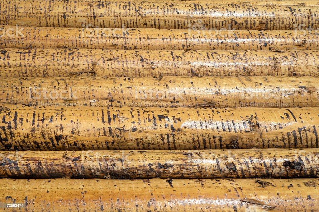 Peeled wet tree trunks stock photo
