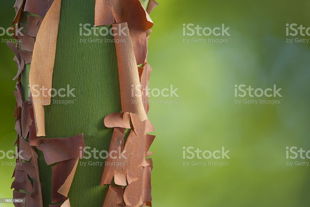 Peeling Bark stock photo