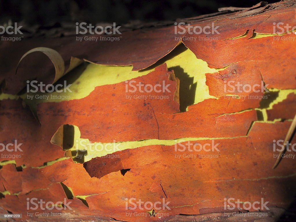 Peeling colorful barque #1 royalty-free stock photo