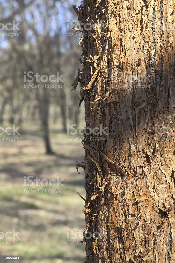 peeling royalty-free stock photo