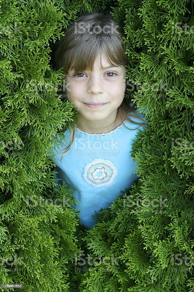 Peering through the hedge #1 royalty-free stock photo