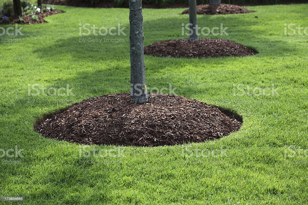 Pefect Lawn royalty-free stock photo
