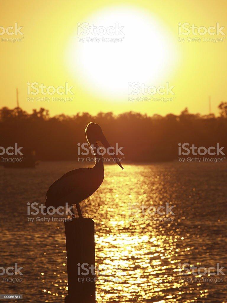 Pelcian Sillhouette stock photo