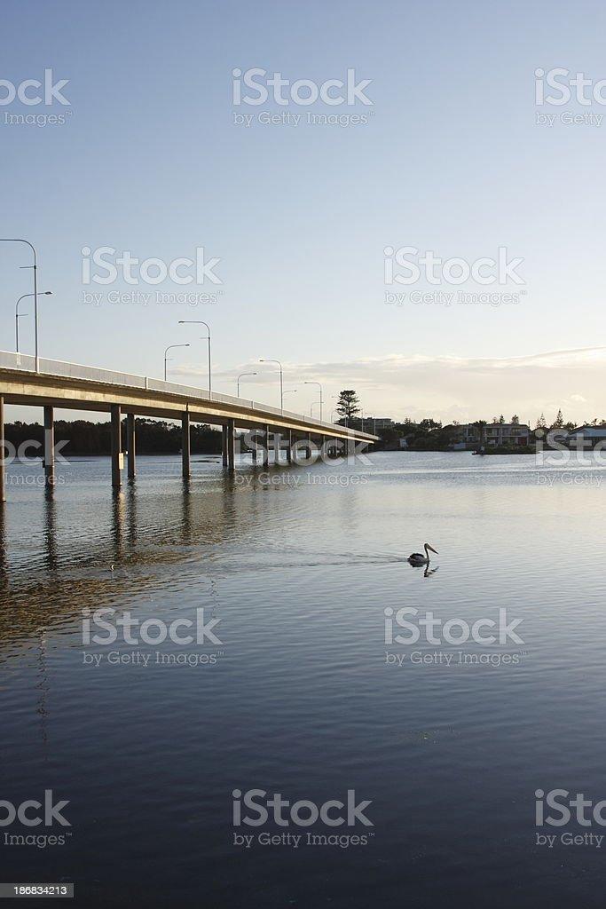 Pelican and Bridge royalty-free stock photo