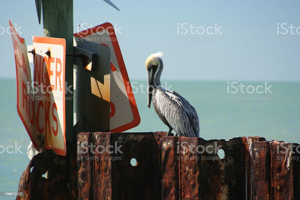 Pelican at the Bay royalty-free stock photo