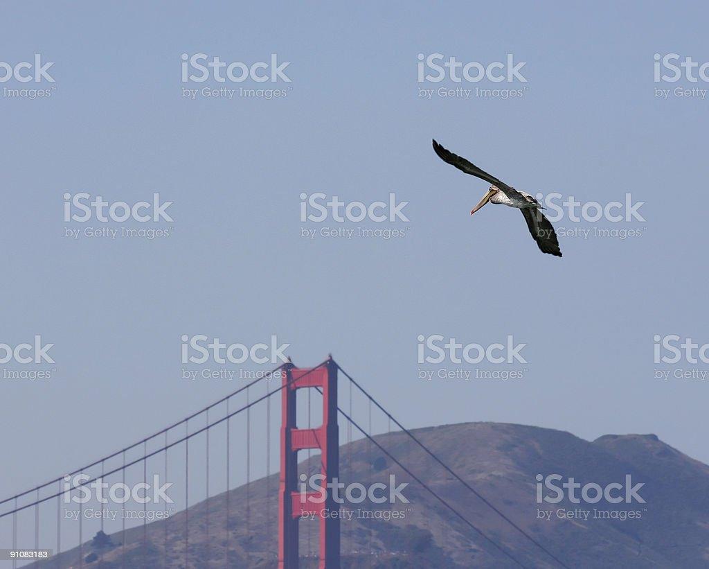 Pelican Bridge royalty-free stock photo