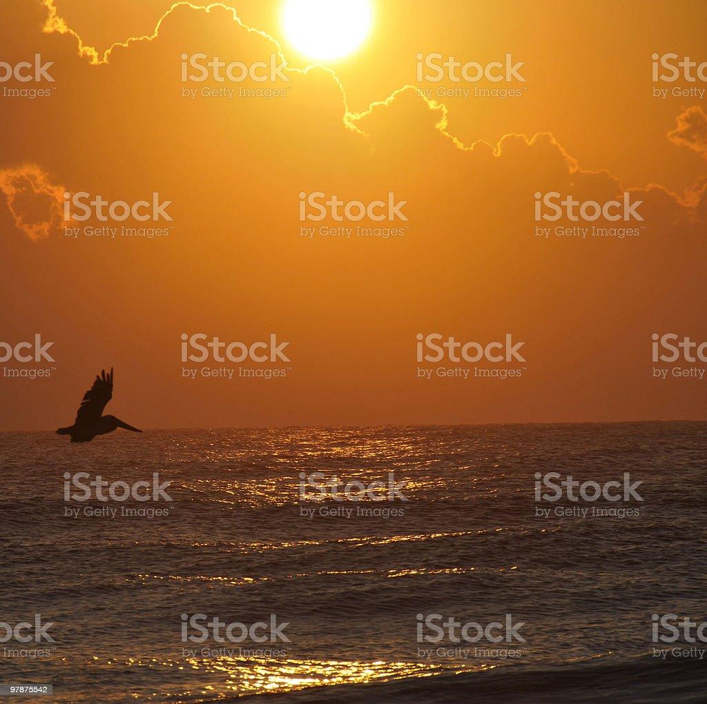 Pelican Flies Across a Beach Sunrise stock photo