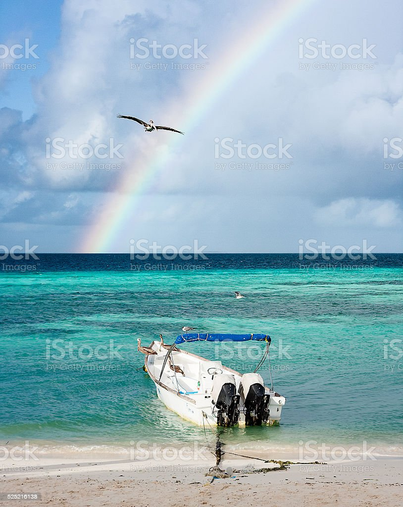 Pelican flying against rainbow stock photo