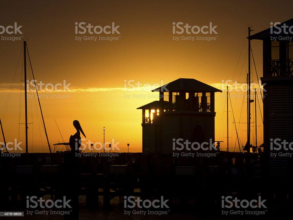 Pelican in Gulfport Small Craft Harbor at Sunrise stock photo