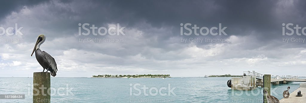 Pelican Perched on Dock Near Tropical Ocean stock photo