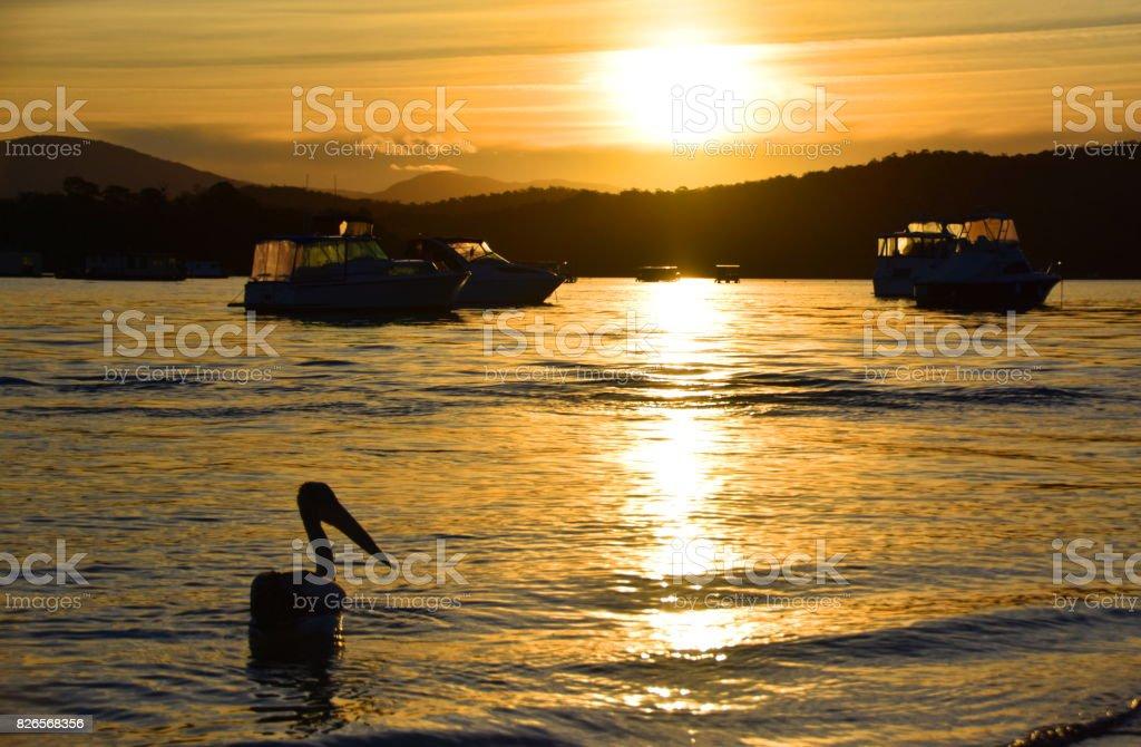 Pelican Silhouette stock photo