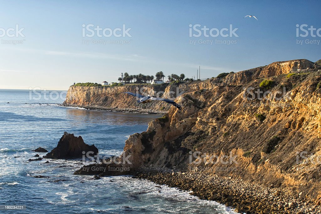 Pelican Soaring Over Palos Verdes stock photo