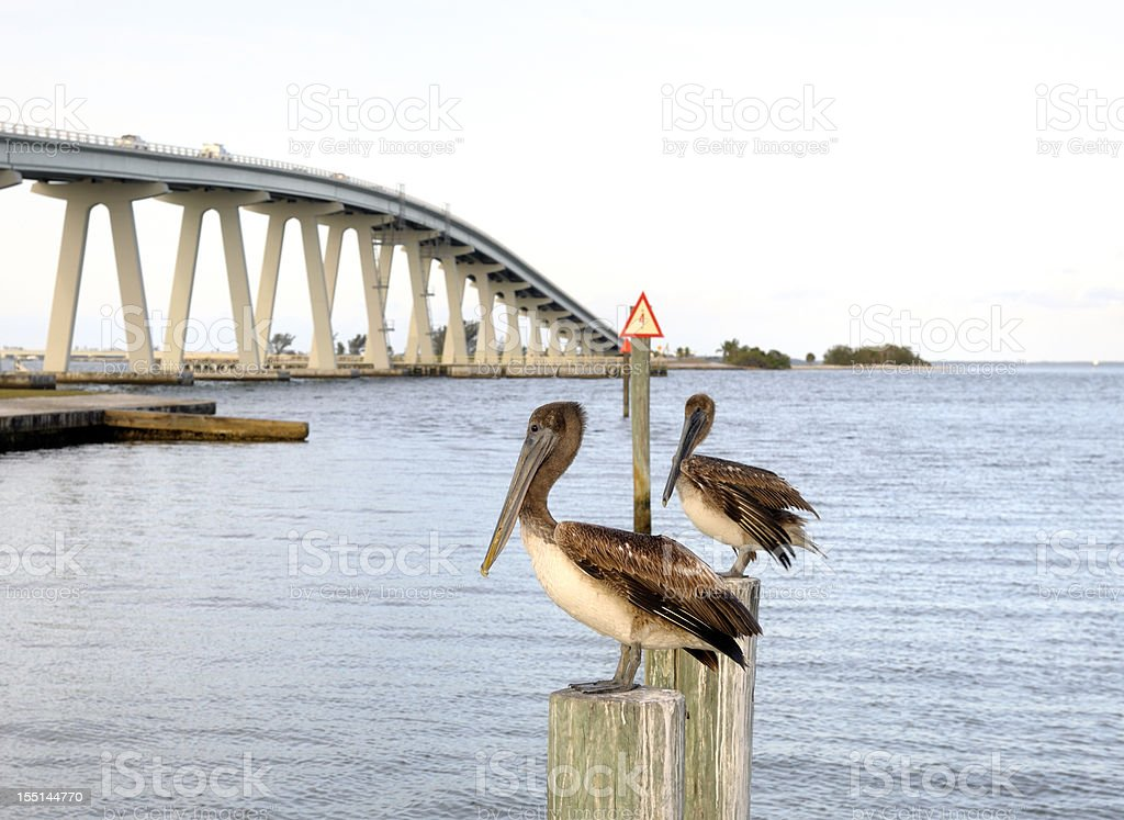 Pelican watch at Sanibel bridge Florida USA stock photo