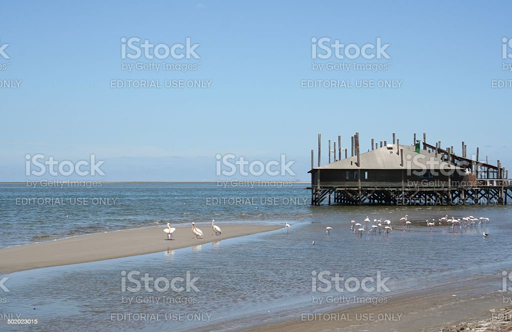 Pelicans and Flamingos in the Lagoon of Walvis Bay, Namibia stock photo
