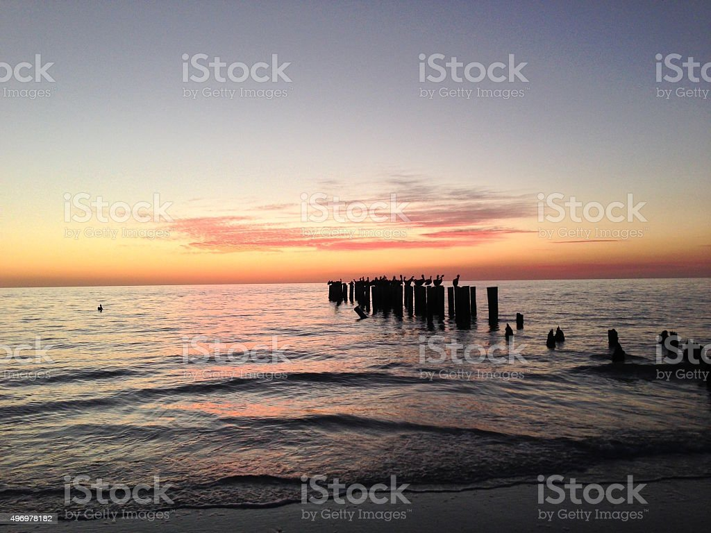 Pelicans at sunset in Naples, Florida stock photo