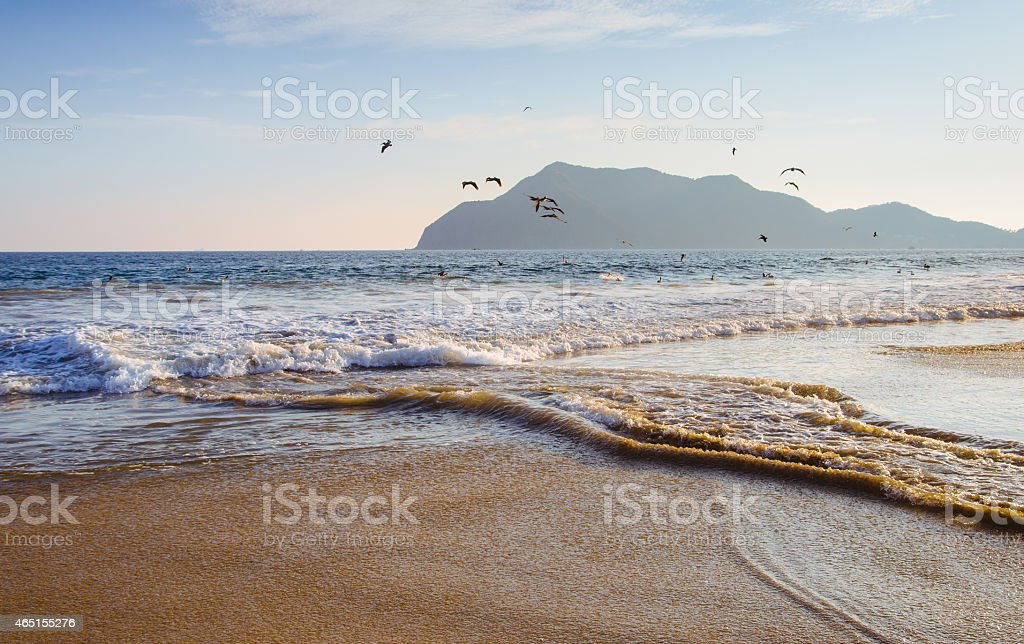 Pelicans dive into crashing surf on Pacific shore stock photo